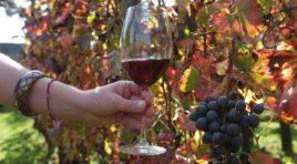 Vino: in Sicilia conclusa vendemmia, annata di qualità