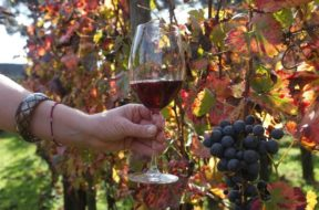 Vino: vendemmia Italia n.1, è sorpasso su Francia e Spagna