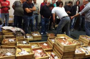 pesca-mercato-ingrosso-pescato