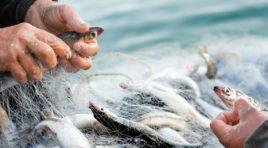 Undici milioni e mezzo per la pesca in Sicilia, pubblicati 7 bandi Feamp