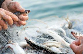 pescare-pesca-pesce