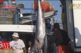 VIDEO: La pesca si coalizza per giocare bene la carta dei finanziamenti FEAMP 2014/2020