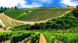 Per i vini Grillo ed il Nero D'Avola niente più Igt, dal 2017 solo etichetta Doc Sicilia