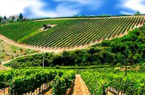 vigneti-trapani-paesaggio-vitivinicolo-doc-sicilia-vino