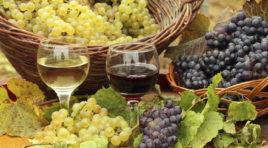 Settore vinicolo in ginocchio, si impone meno rese per ettaro
