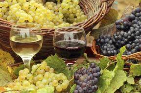 wine-vino-uva-ceste-raccolto