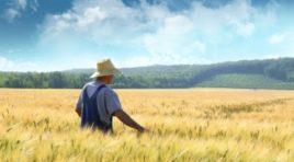 Agricoltura, oltre 300 mila imprese esentate dal pagamento dell'Irpef
