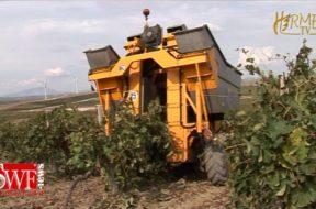 Il Testo Unico sulla viticoltura, la prima pietra miliare verso l'enologia moderna
