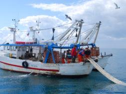 pescherecci mare pesca
