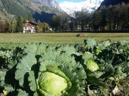 Agricoltura di montagna, otto idee per fare reddito