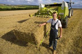 Agricoltura, il sud cresce mettendo in campo le sue migliori risorse i giovani