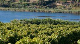Grillo Experience: Gorghi Tondi celebra il vitigno siciliano