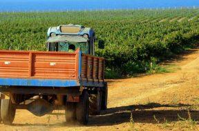 Grillo Experience Gorghi Tondi celebra il vitigno siciliano