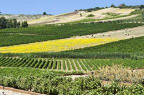 L'Azienda Campo Carboj potrebbe diventare Libera Università Rurale Euro Mediterranea 3