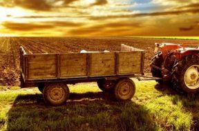 Mafia e malaffare, ecco l'agricoltura nera della Sicilia a caccia di aiuti Ue