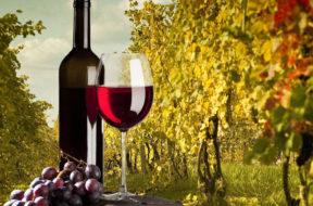 Territori, biodiversità e tradizione enologica il valore aggiunto del terroir siciliano_vino bottiglia uva vigneto