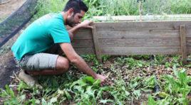 Allevamento di lumache, il business dell'escargot parla siciliano