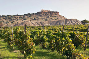 Vigneto-agrigento-valle-dei-templi-vino-Diodoros-