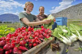 agricoltura_agricoltori_verdure_ortaggi_campo_cibo_food