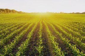 agricoltura_campo_seminato