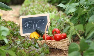 bio_agricoltura_biologica_orto