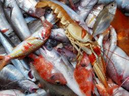 pesce_fresco_pescato_esposizione_banco_ittico