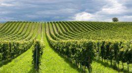 I Georgofili a Donnafugata per la Sicilia della bellezza e del vino