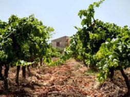 Firriato Winery – Authentic Terroir