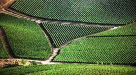 SOStain, nasce il primo protocollo integrato di sostenibilità per la vitivinicoltura siciliana
