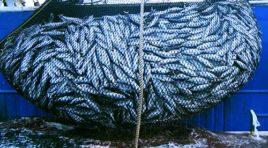 Pesca, nasce la Federazione di armatori e pescatori in Sicilia
