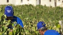 """Vendemmia 2017, Assovini Sicilia: """"annata qualitativamente molto buona"""""""