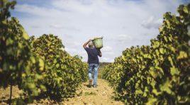 """Agricoltura in crisi, lo sfogo di un agricoltore """"tradito"""" dalle aspettative."""