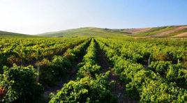 Ocm investimenti, 36 milioni per 97 cantine in Sicilia – LA GRADUATORIA