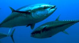 Favignana, l'Isola del tonno. Il Dipartimento della Pesca Mediterranearilancia la pesca alle Egadi