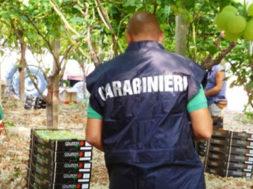 Vendemmia nera in Sicilia, i carabinieri hanno scoperto centinaia di vendemmiatori non in regola
