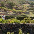 PASSITALY 2017: nuovi scenari per l'isola ed il Passito di Pantelleria