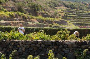 PASSITALY 2017 nuovi scenari per l'isola ed il Passito di Pantelleria1
