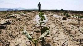Siccità, il deputato Pellegrino interroga la Regione Siciliana per gli aiuti agli agricoltori