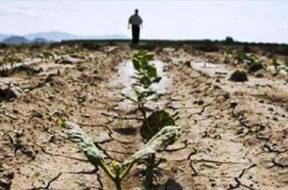 siccità campo coltivazione sicilia