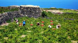 Dalla vigna alla cantina fino alla bottiglia, lo smarphone svela tutto sul vino siciliano