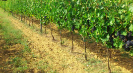 """A Petrosino la rassegna: """"Territori del vino e del gusto, un viaggio alla scoperta del genius loci"""""""