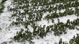 Agricoltura, milioni di euro per prevenire i danni del maltempo in Sicilia