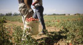 Agromafia nel siracusano: arrestati 19 pregiudicati che controllavano i prezzi