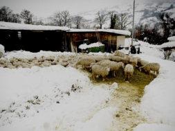 gelo danni agricoltura zootecnia