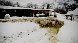Agricoltura e Zootecnia in ginocchio in Sicilia