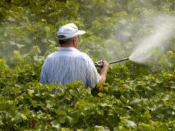 Prodotto fitosanitari