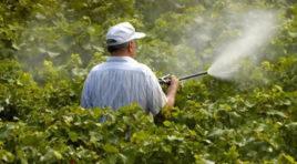 Trapani, 2 corsi per l'uso dei fitosanitari