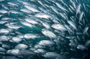 pesci-mare-pesca-2