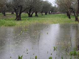 sicilia esondazione danni agricoltura