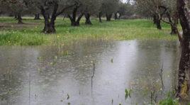 Agricoltura in ginocchio, in Sicilia urgono interventi per fronteggiare le calamità naturali